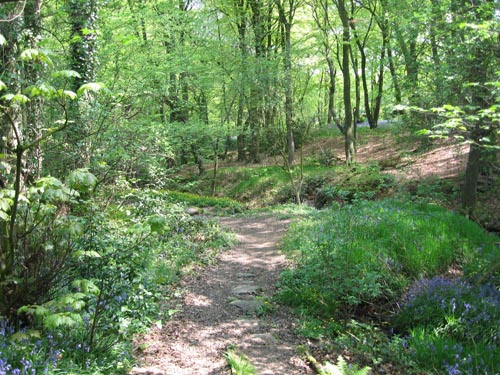 Upper Derane Woodlands